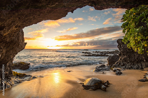 Tortue Turtles in a Cave