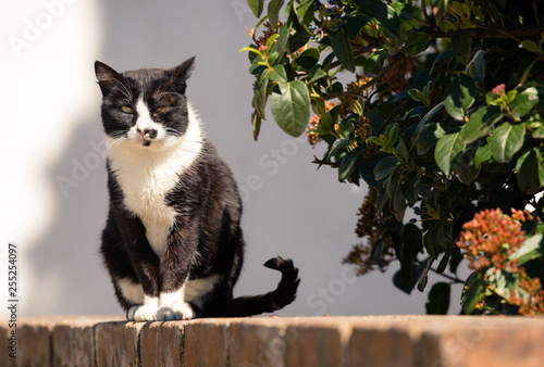 Cuadros en Lienzo Gato sentado ao sol