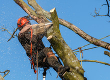 Chainsaw In Use By A Tree Surg...