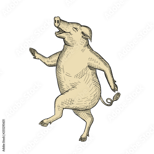 Valokuva  Drawing sketch style illustration of a jolly and happy pig dancing, walking or taking a stride viewed from side on isolated white background