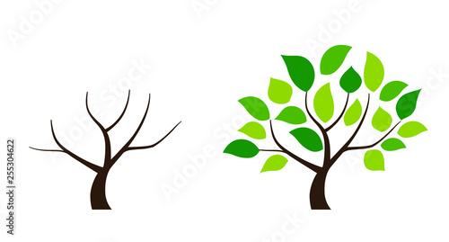Fotografía  Tree icon set