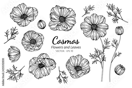 Fotografija Collection set of cosmos flower and leaves drawing illustration.