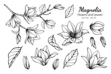 Collection Set Of Magnolia Flo...