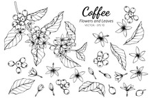 Collection Set Of Coffee Flowe...
