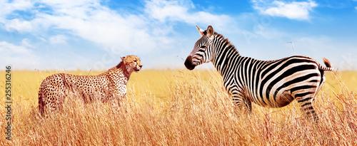 Zebra i gepard w afrykańskiej sawannie. Park Narodowy Serengeti. Afryka. Tanzania. Projekt banera.