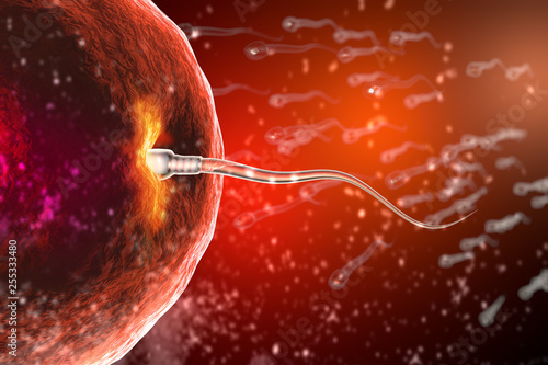 Photo  Fertilization of human egg cell by sperm cell spermatozoon