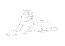 Dog Lies, Lines, Vector,