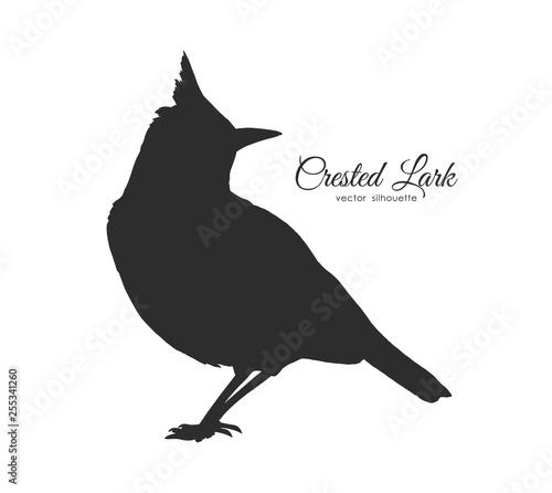 Fotografie, Obraz Silhouette of Crested Lark