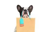 Fototapeta Zwierzęta - French bulldog with the shopping bag