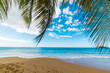 Palm branches by the sea in La Perle beach in Guadeloupe