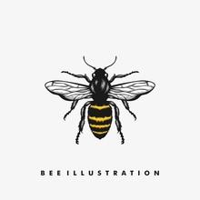 Bee Illustration Vector Design Template