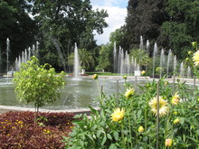 Yellow Flowers And A Water Fountain - Dandelion