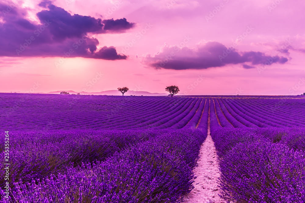 Fototapety, obrazy: Stunning landscape with lavender field at sunset. Blooming violet fragrant lavender flowers with sun rays with warm sunset sky.