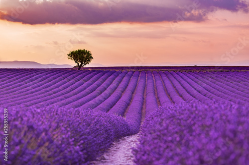 Foto auf Gartenposter Lavendel Stunning landscape with lavender field at sunset. Blooming violet fragrant lavender flowers with sun rays with warm sunset sky.
