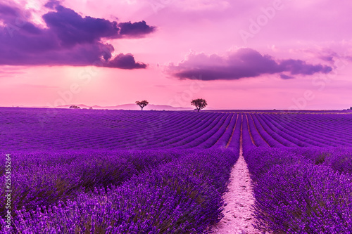 Stunning landscape with lavender field at sunset. Blooming violet fragrant lavender flowers with sun rays with warm sunset sky. - 255355264