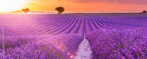 Stunning landscape with lavender field at sunset. Blooming violet fragrant lavender flowers with sun rays with warm sunset sky. - 255355412