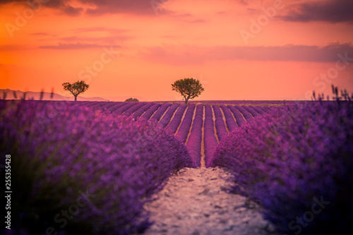 Montage in der Fensternische Koralle Panoramic view of French lavender field at sunset. Sunset over a violet lavender field in Provence, France, Valensole. Summer nature landscape