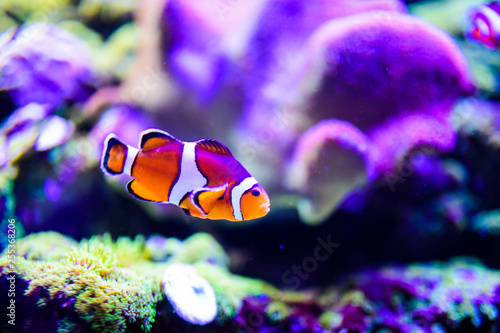 Fotomural  Wonderful and beautiful underwater world with corals and tropical fish