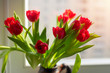 bouquet of red tulips on the windowsill
