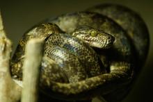 Serpiente En Selva Amazonas