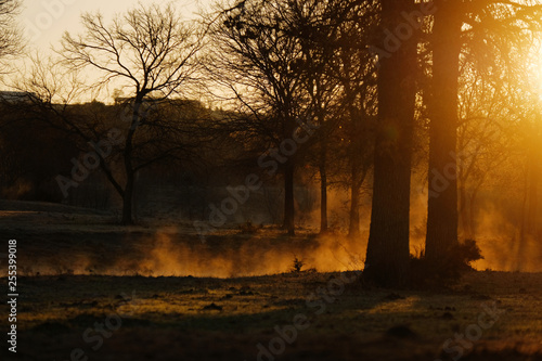Poster Marron chocolat Morning steam off pond water behind trees. Texas landscape with sunrise in background.