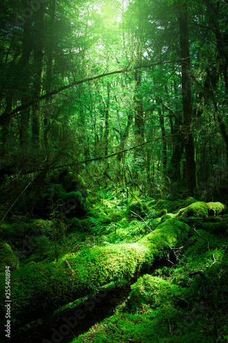 Acrylic Prints Green 神秘の光