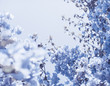 Blue floral composition