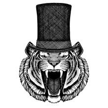Wild Animal Wearing Top Hat, Cylinder. Hipster Tiger, Cat