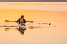 Happy Woman Sea Kayaking Enjoying Watching Wildlife Harbor Seal In Beautiful Nature. Outdoor Adventure Water Sports.