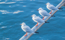 Four White Seagulls Sitting On A Beam On A Blue Water Background