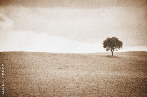 Pinturas sobre lienzo  Lone tree in Tuscan landscape, aged and toned sepia