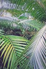 Tropikalne Liście Palmy W Les...