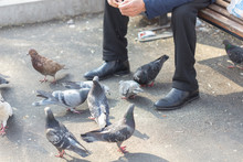 Man Sits Outside And Feeds Pigeons From Hands
