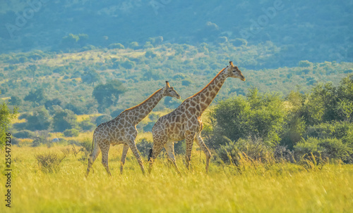 Authentic true South African safari experience in bushveld in a game reserve