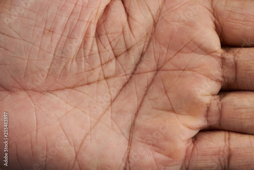 Lines on human hand palm Wallpaper Mural