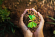 Leinwanddruck Bild - top view hand holding young plant growing. concept eco and earth day