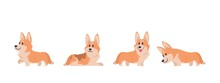 Cartoon Corgi. Flat Puppy For ...