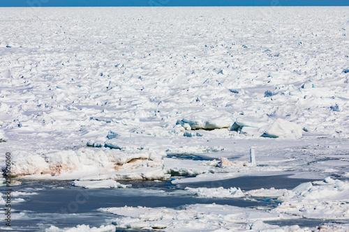 Fotografie, Obraz  Frozen North Atlantic Ocean ice floes covering sea