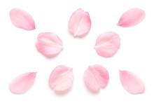 桜 花びら 春 白背景