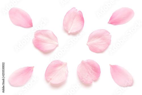 Papiers peints Fleur de cerisier 桜 花びら 春 白背景