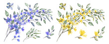 Watercolor Drawing Of Twig With Leaves And Flowers. Botanical Illustration Composition Of Yellow Flowers And Wild Herbs.