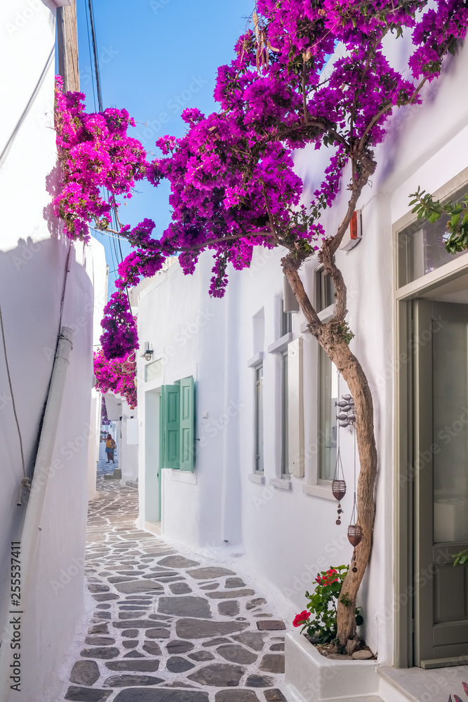 Fototapeta View of a typical narrow street in old town of Naoussa, Paros island, Cyclades