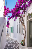 Fototapeta  - View of a typical narrow street in old town of Naoussa, Paros island, Cyclades