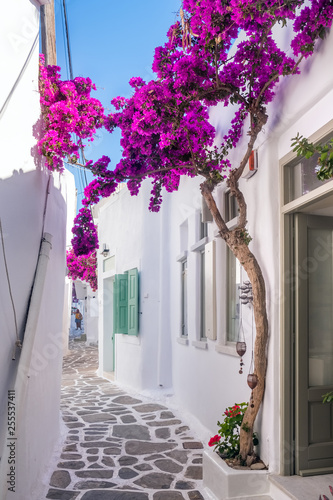 Photo Stands Narrow alley View of a typical narrow street in old town of Naoussa, Paros island, Cyclades