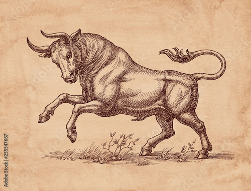 Hand drawn illustration in retro style, wild bull.