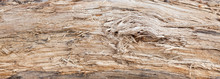 Tree Trunk Stripped Of Bark Background Or Texture