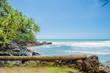 Coconut trees, intense vegetation and large rocks in contact with the sea. Fallen wooden trunk used as bench in the foreground