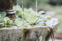 Small Fountain With Small Plants In A Garden. Relax Concept