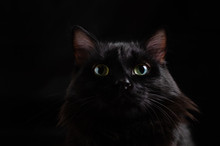 Black Beautiful Cat On Black Background With Bright Eyes.