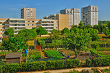 Fototapeta Londyn - Les Mureaux; France - may 13 2011: allotment garden
